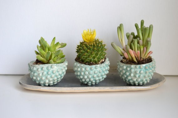 july - planters (1)
